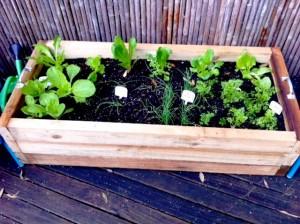 Tiarna's Organic Veggie Patch Progress…