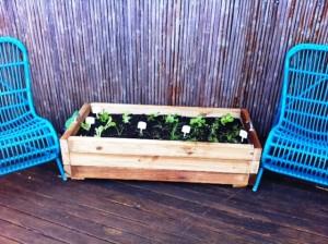 140604 Tiarnas veggie garden 1